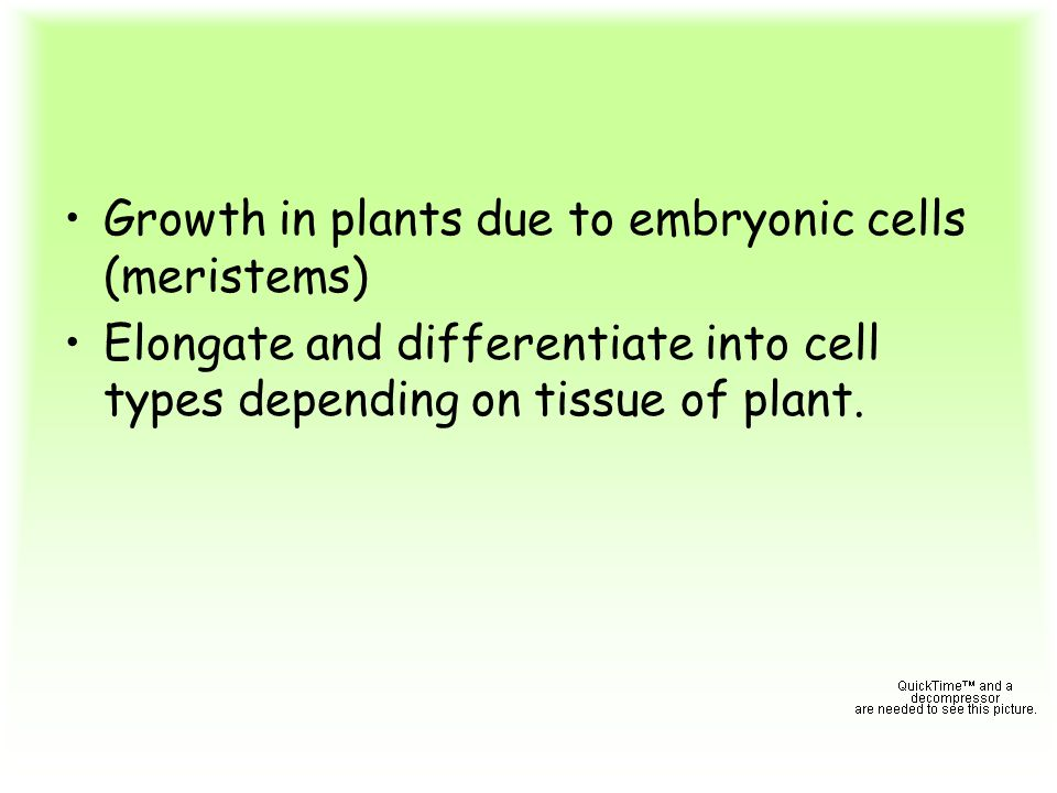 Growth in plants due to embryonic cells (meristems)