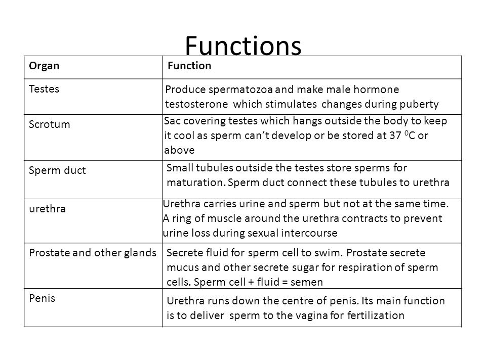 Reproduction In Humans Male Reproductive System Ppt Video Online