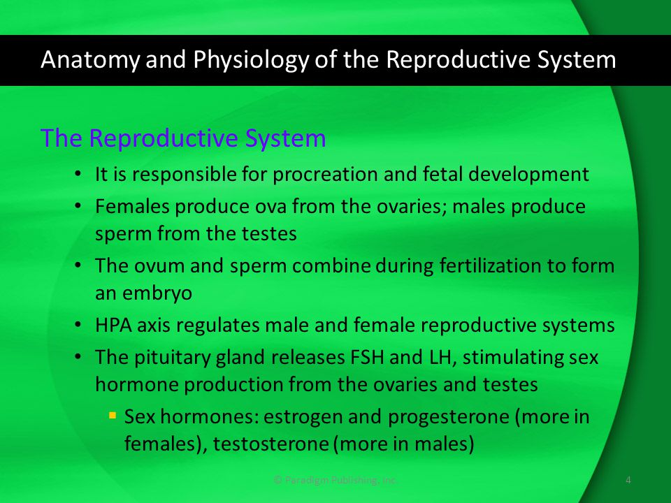 The Reproductive System and Drug Therapy - ppt download