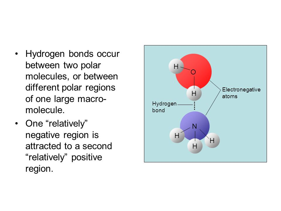 Hydrogen bonds occur between two polar molecules, or between different polar regions of one large macro-molecule.