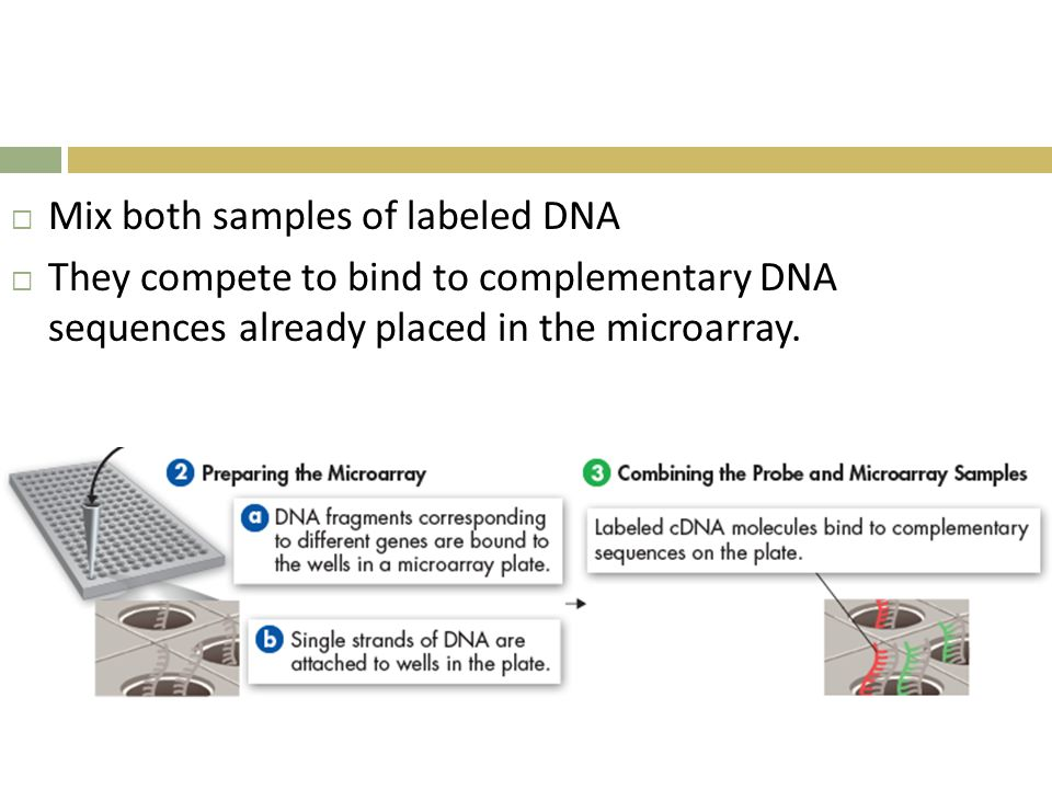 Mix both samples of labeled DNA