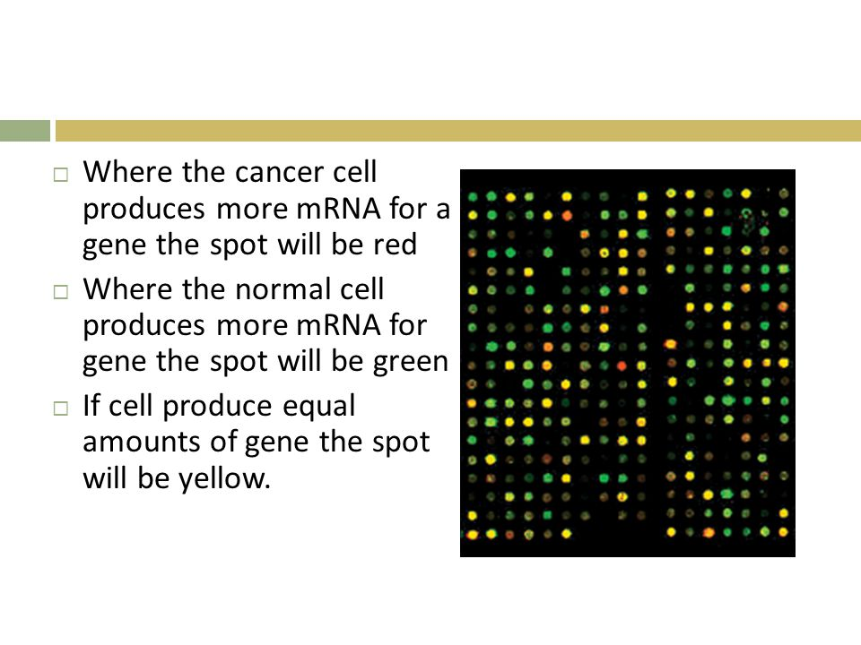 Where the cancer cell produces more mRNA for a gene the spot will be red