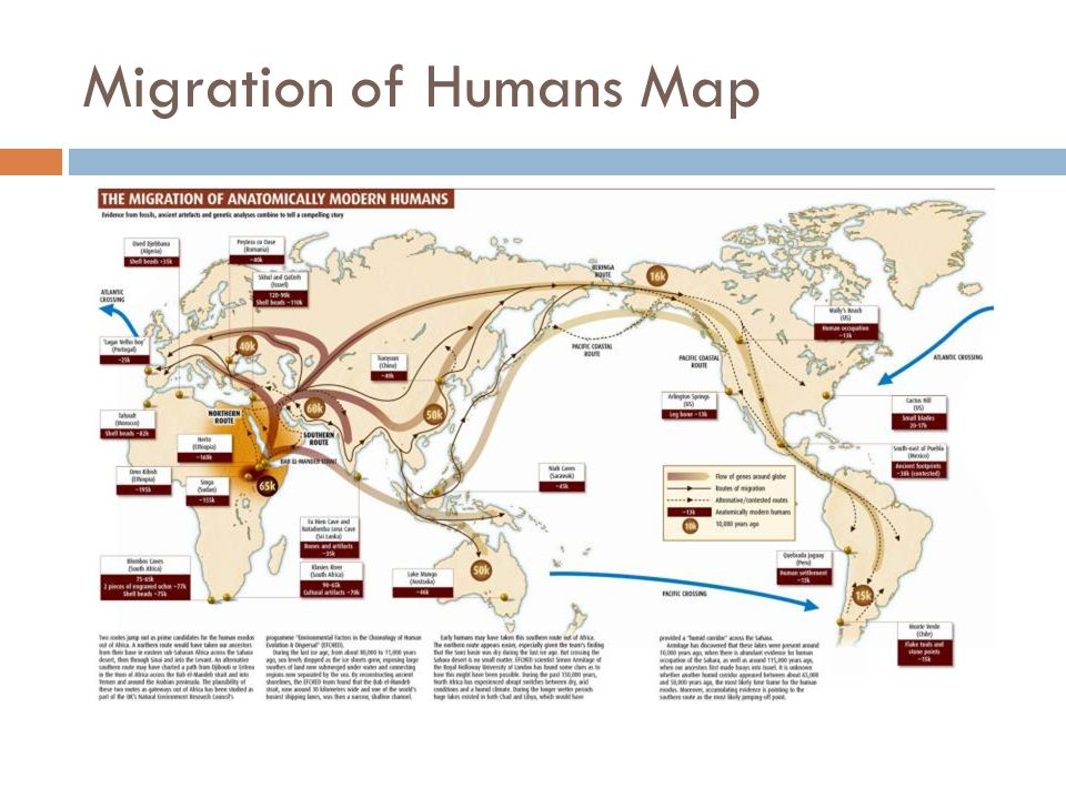 Ap world history period 1 c 600 bce ppt video online download 3 migration of humans map gumiabroncs Images