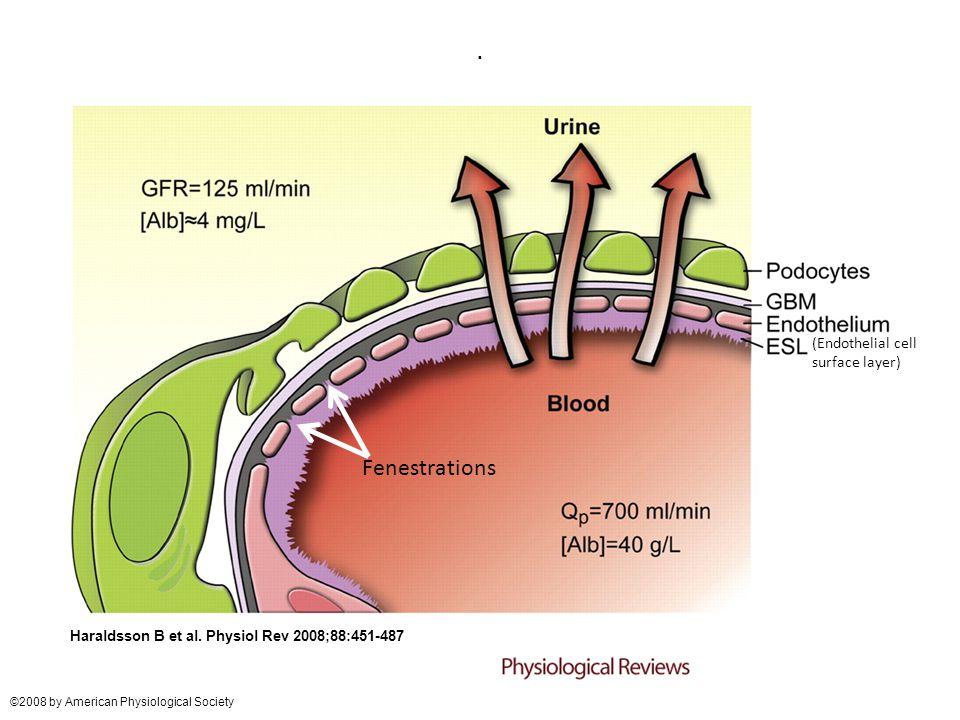 glomerular anatomy and physiology