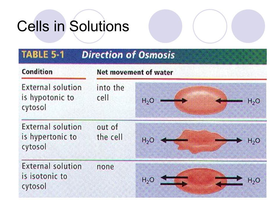 Cells in Solutions