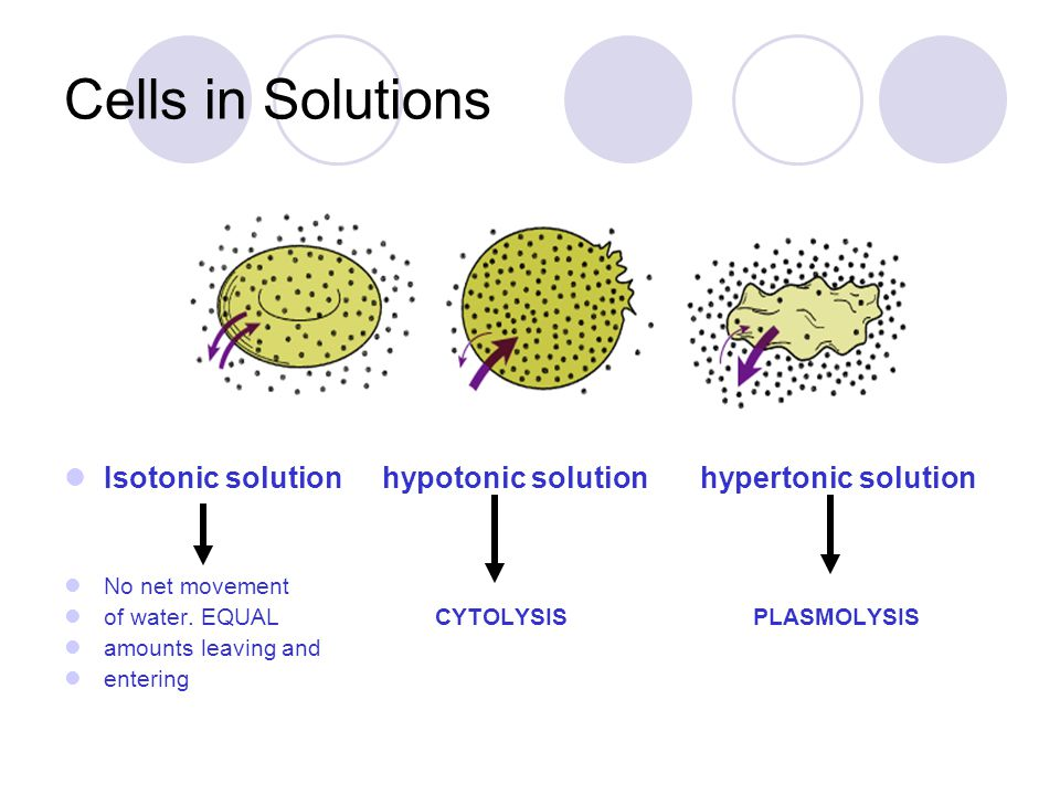 Cells in Solutions Isotonic solution hypotonic solution hypertonic solution. No net movement.