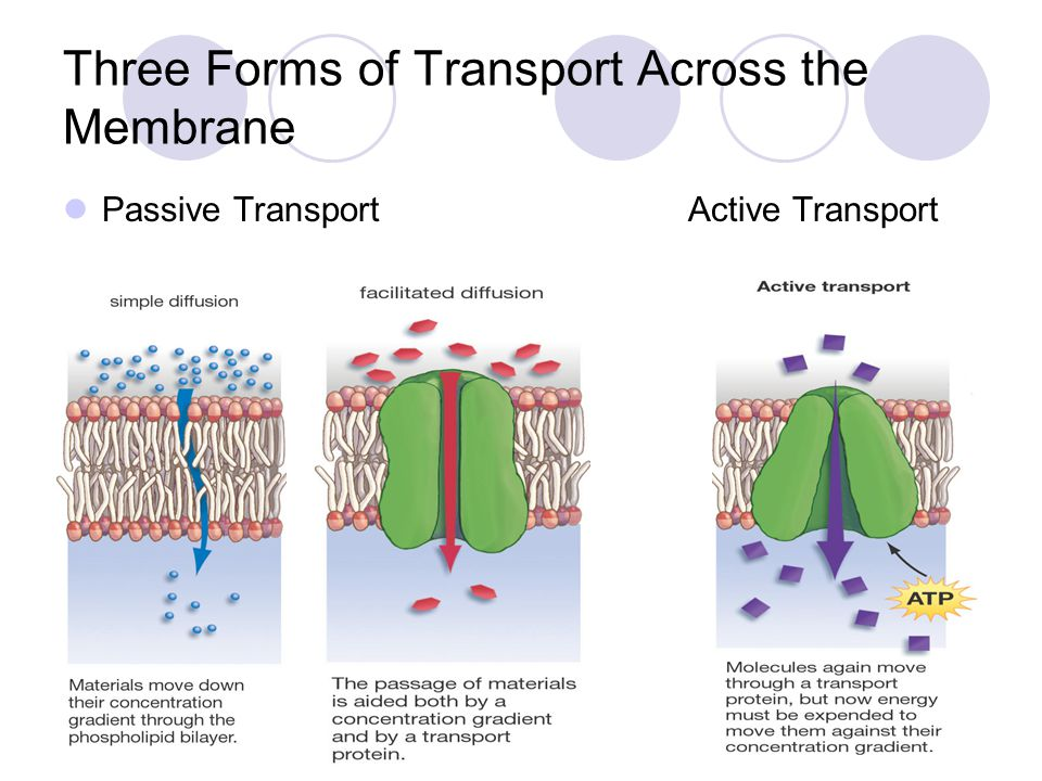 Three Forms of Transport Across the Membrane