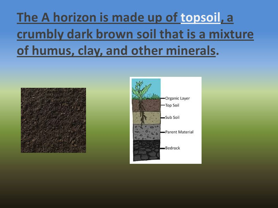 The A horizon is made up of topsoil, a crumbly dark brown soil that is a mixture of humus, clay, and other minerals.