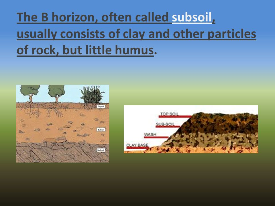 The B horizon, often called subsoil, usually consists of clay and other particles of rock, but little humus.
