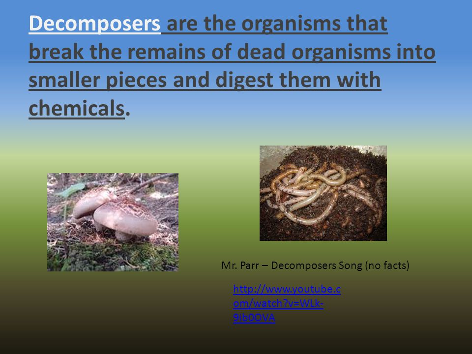 Decomposers are the organisms that break the remains of dead organisms into smaller pieces and digest them with chemicals.