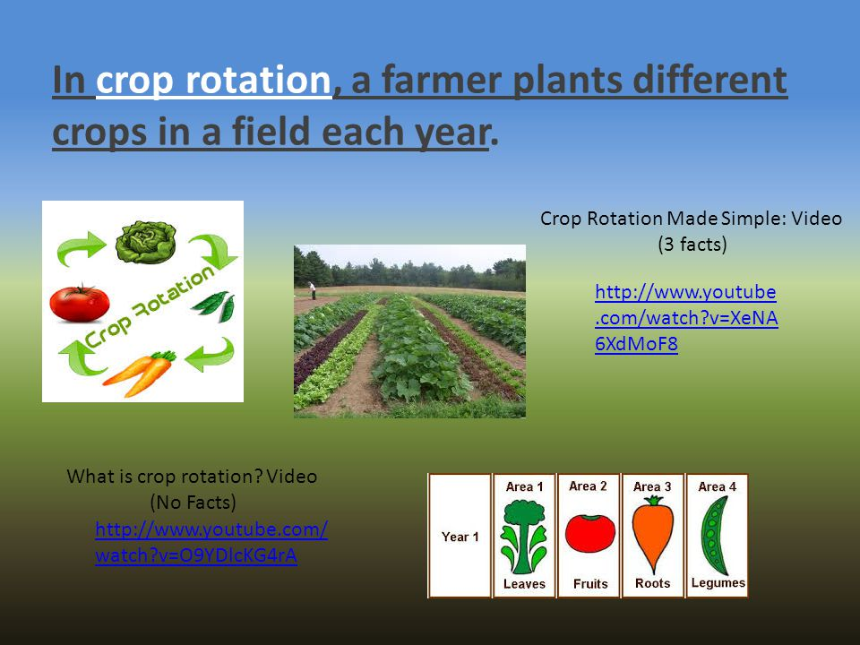 In crop rotation, a farmer plants different crops in a field each year.