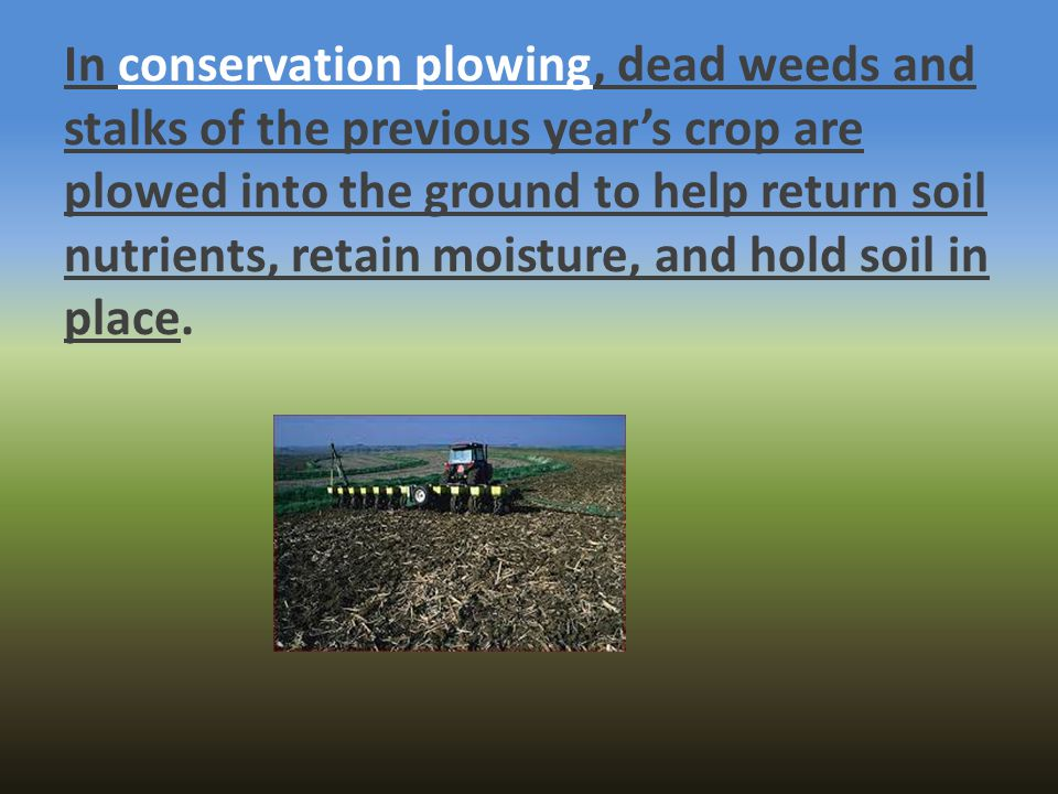 In conservation plowing, dead weeds and stalks of the previous year's crop are plowed into the ground to help return soil nutrients, retain moisture, and hold soil in place.