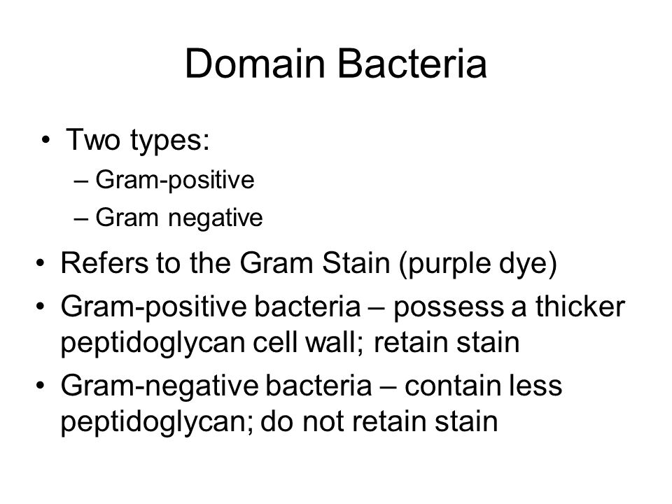 Domain Bacteria Two types: Refers to the Gram Stain (purple dye)
