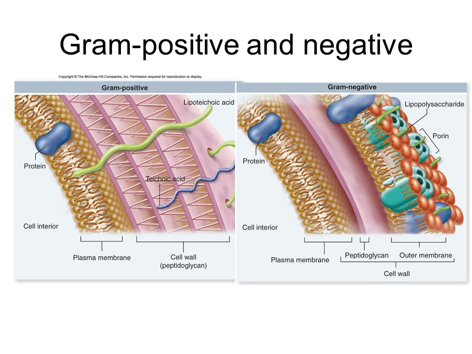 Gram-positive and negative