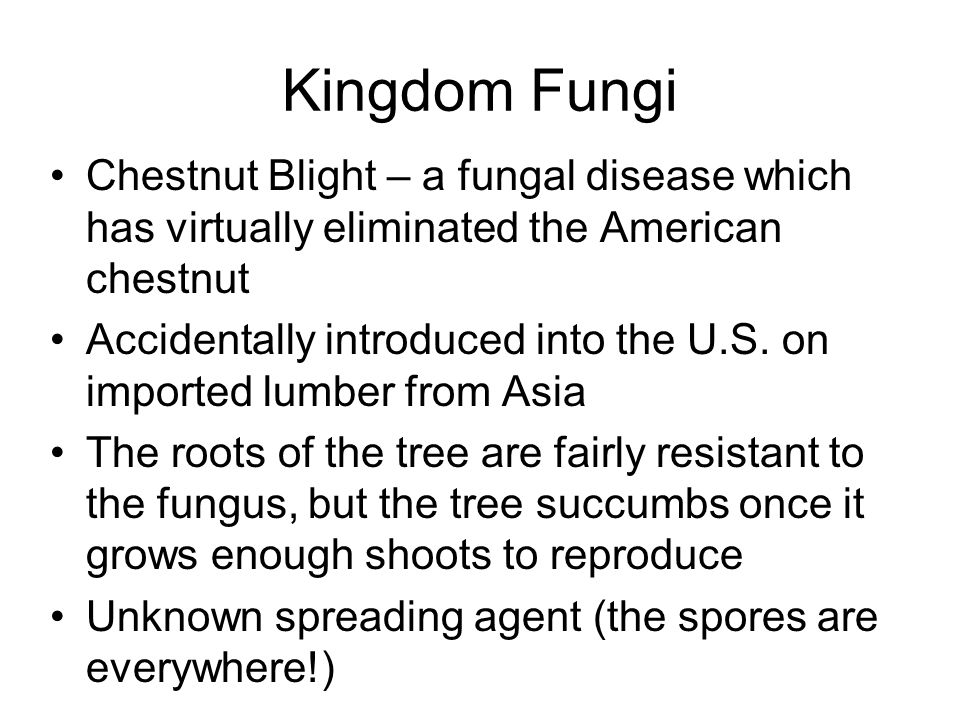 Kingdom Fungi Chestnut Blight – a fungal disease which has virtually eliminated the American chestnut.