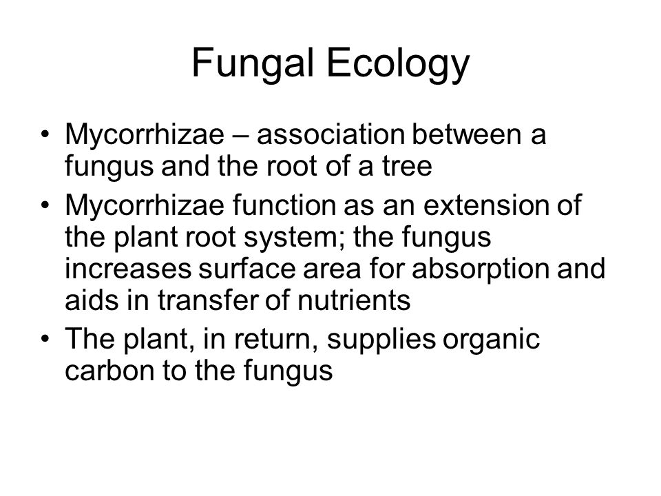 Fungal Ecology Mycorrhizae – association between a fungus and the root of a tree.