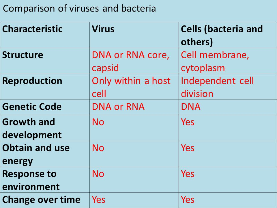Comparison of viruses and bacteria