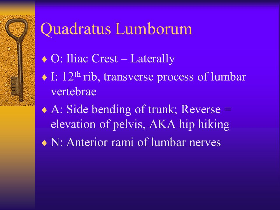 Quadratus Lumborum O: Iliac Crest – Laterally