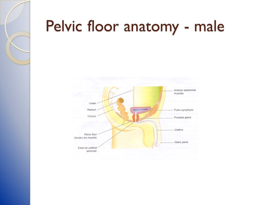 Pelvic Floor Muscle Dysfunction In Copd Ppt Download