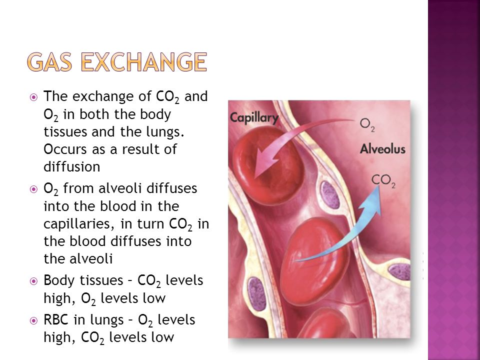Gas Exchange The exchange of CO2 and O2 in both the body tissues and the lungs. Occurs as a result of diffusion.