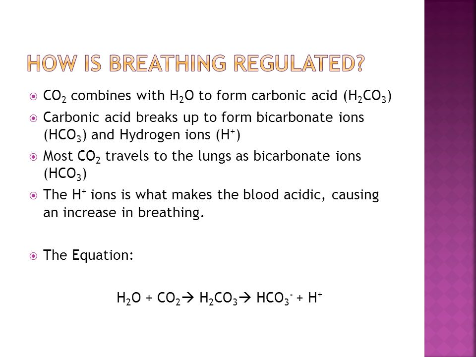 How is breathing regulated