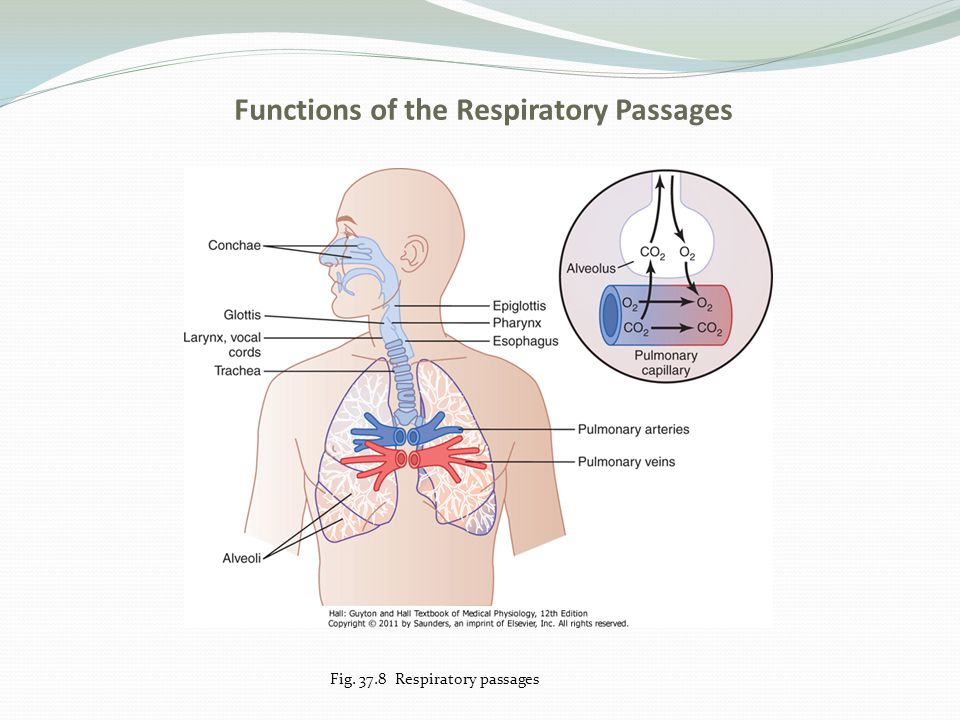 Functions of the Respiratory Passages