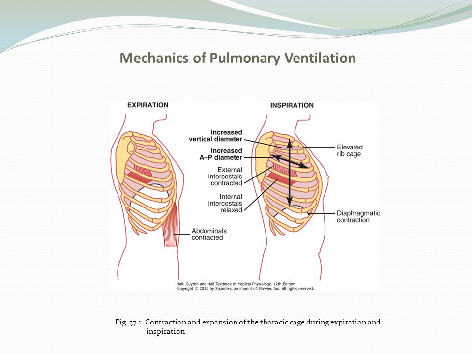 Unit seven respiration ppt video online download mechanics of pulmonary ventilation ccuart