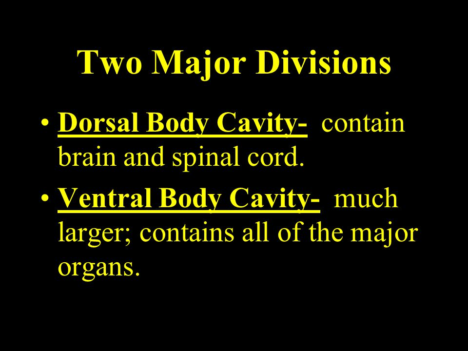 Two Major Divisions Dorsal Body Cavity- contain brain and spinal cord.