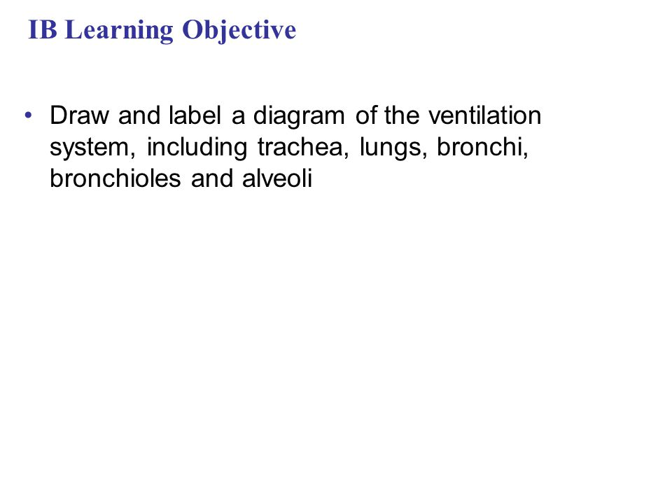 IB Learning Objective Draw and label a diagram of the ventilation system, including trachea, lungs, bronchi, bronchioles and alveoli.