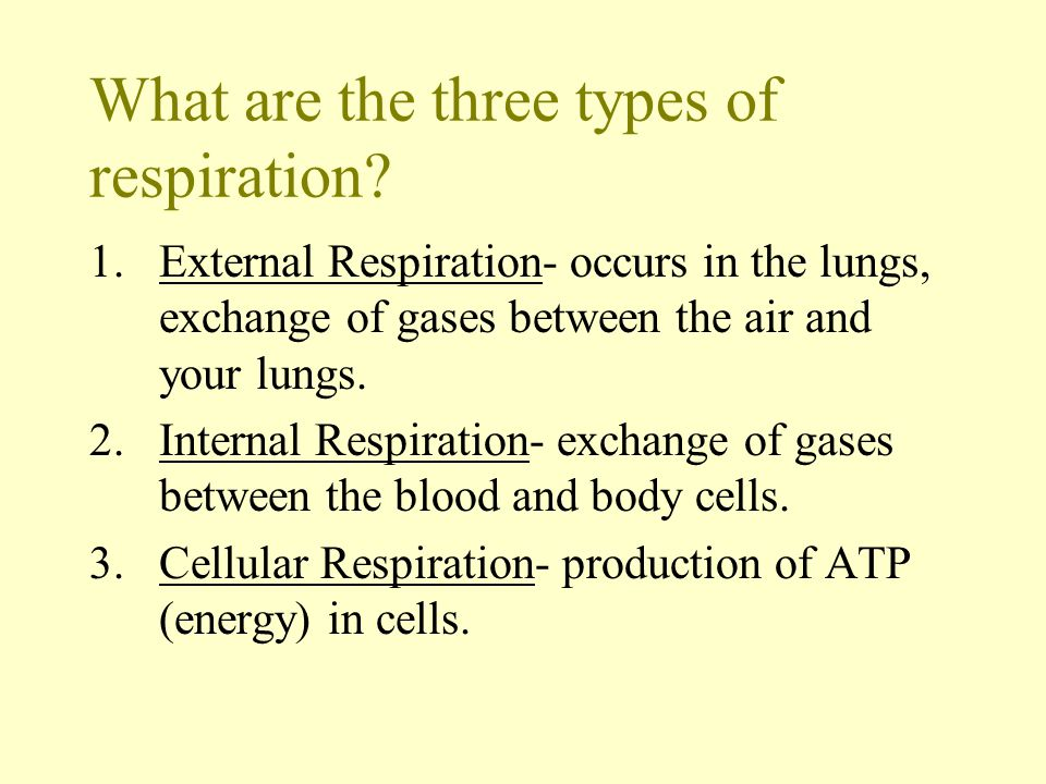 What are the three types of respiration