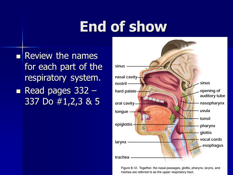 End of show Review the names for each part of the respiratory system.