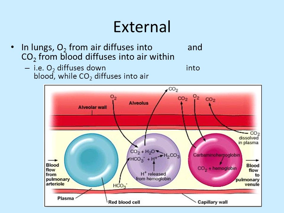 External In lungs, O2 from air diffuses into and CO2 from blood diffuses into air within.