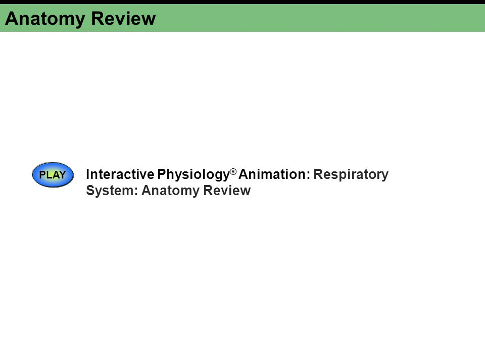 Anatomy Review PLAY Interactive Physiology® Animation: Respiratory System: Anatomy Review