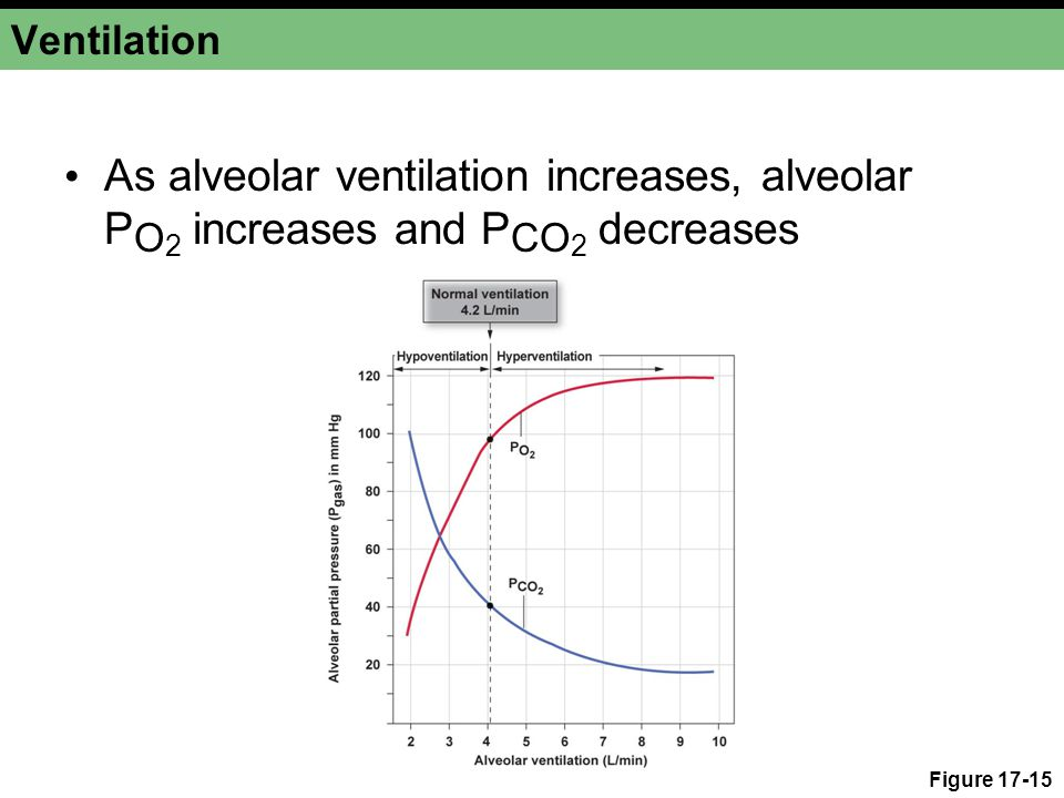 Ventilation As alveolar ventilation increases, alveolar PO2 increases and PCO2 decreases.