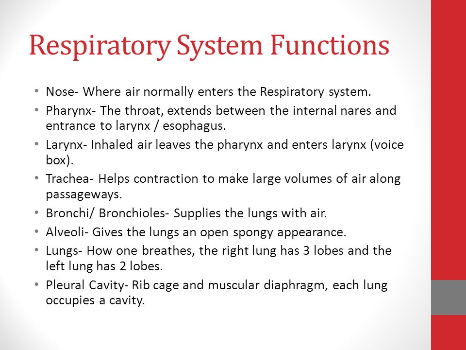 Respiratory System Chapter Ppt Video Online Download