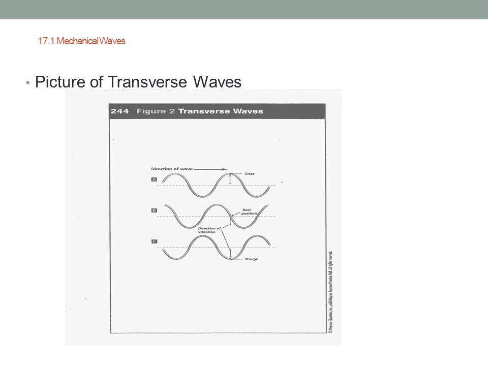 Picture of Transverse Waves