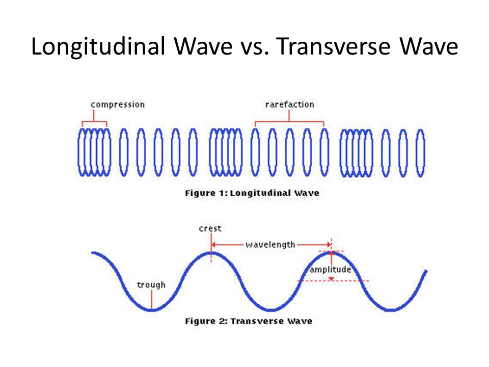 Longitudinal Wave vs. Transverse Wave