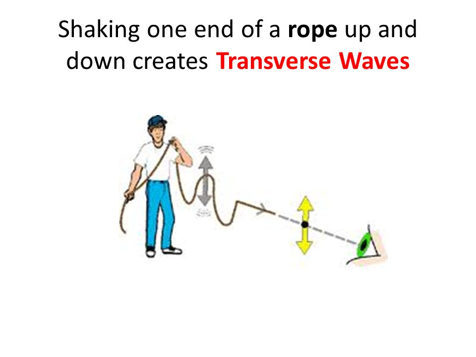 Shaking one end of a rope up and down creates Transverse Waves