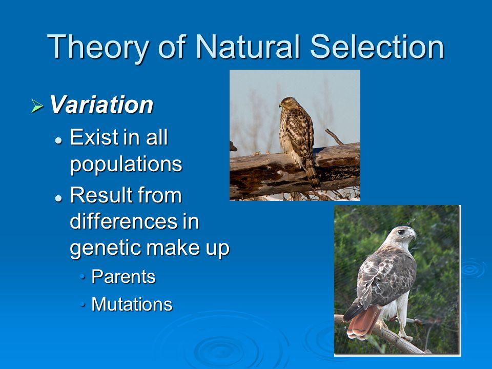 Natural Selection Manuscript