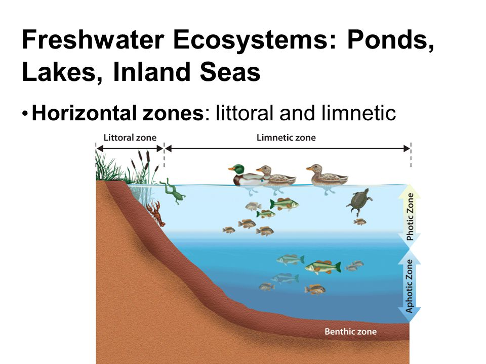 Lesson 6 3 Aquatic Ecosystems Ppt Video Online Download