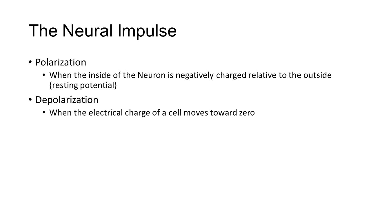 The Neural Impulse Polarization Depolarization