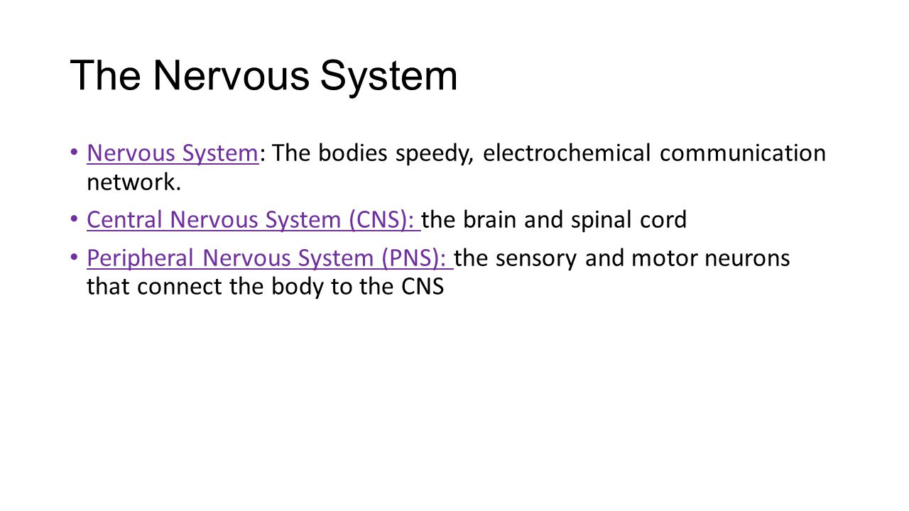 The Nervous System Nervous System: The bodies speedy, electrochemical communication network.