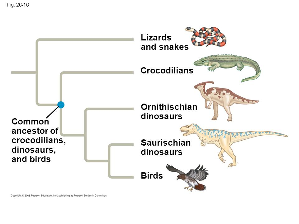 Lizards and snakes Crocodilians Ornithischian dinosaurs Common