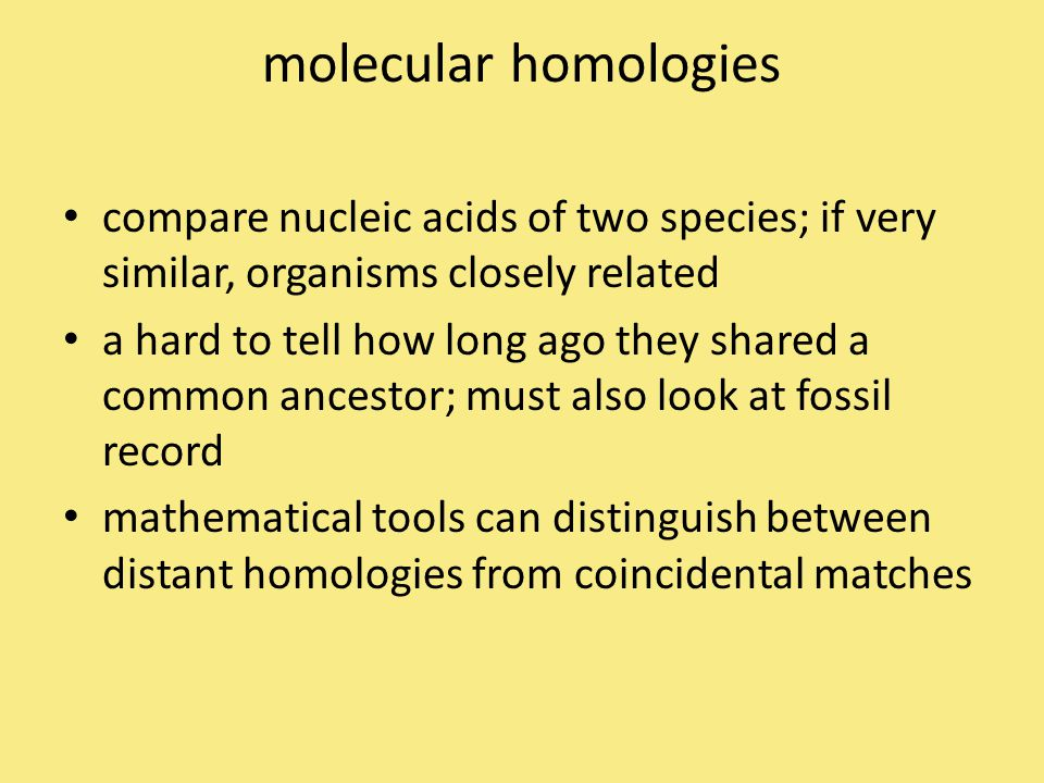 molecular homologies compare nucleic acids of two species; if very similar, organisms closely related.