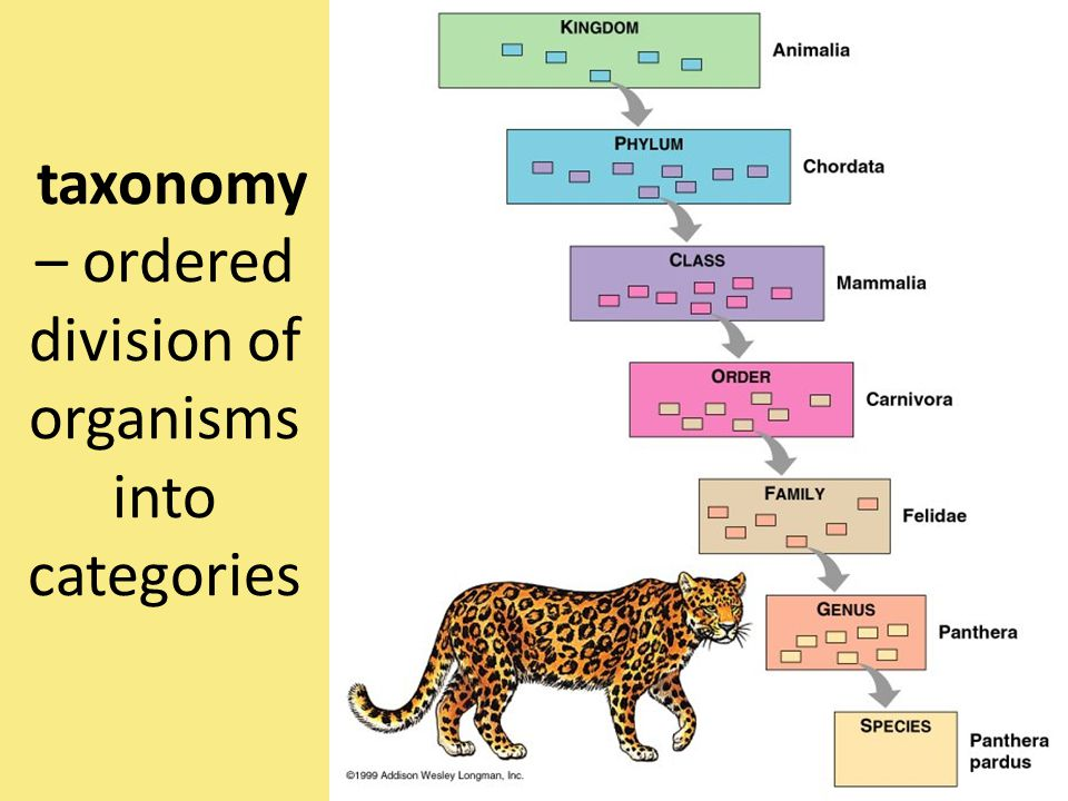 taxonomy – ordered division of organisms into categories