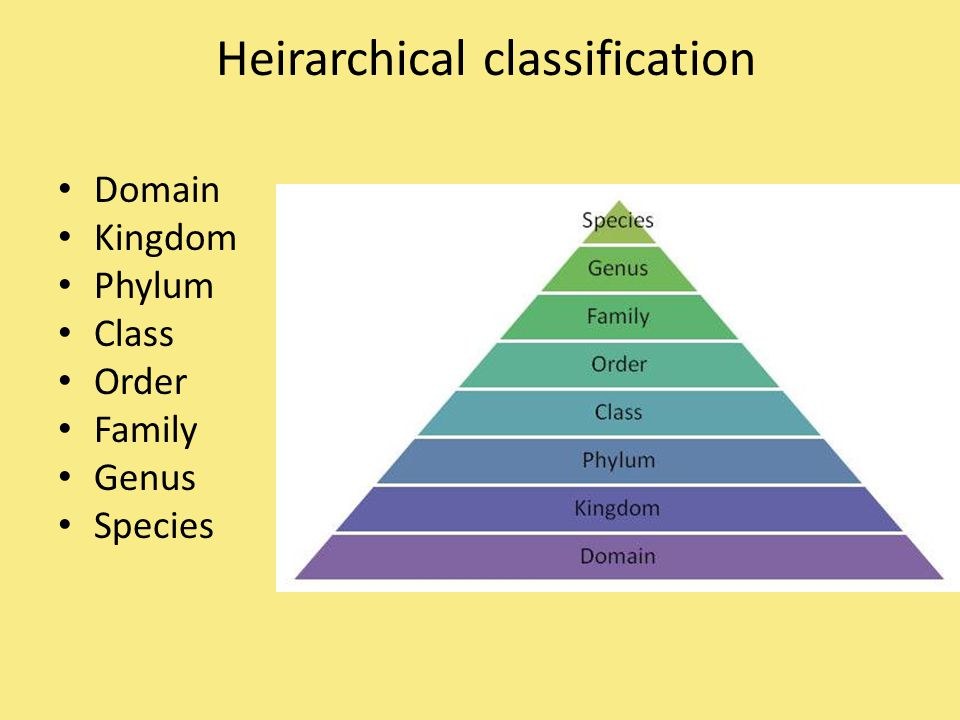 Heirarchical classification