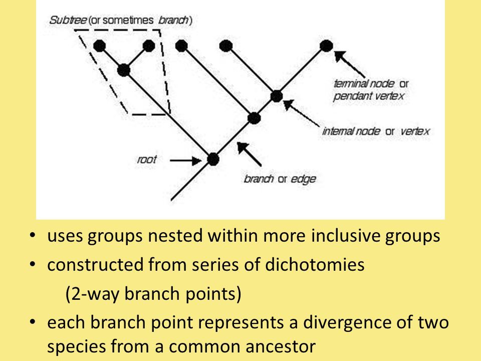 uses groups nested within more inclusive groups
