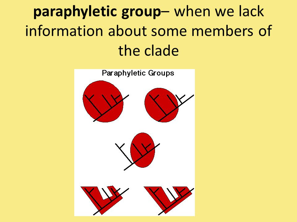 paraphyletic group– when we lack information about some members of the clade