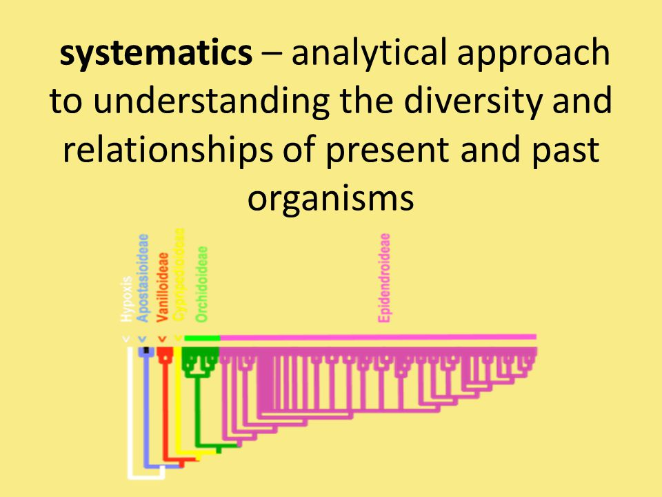 systematics – analytical approach to understanding the diversity and relationships of present and past organisms