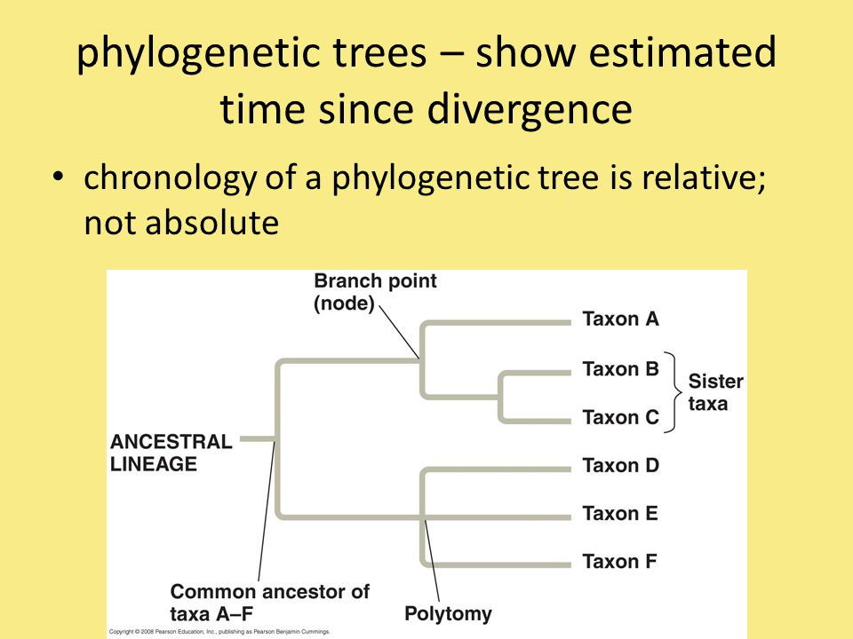 phylogenetic trees – show estimated time since divergence